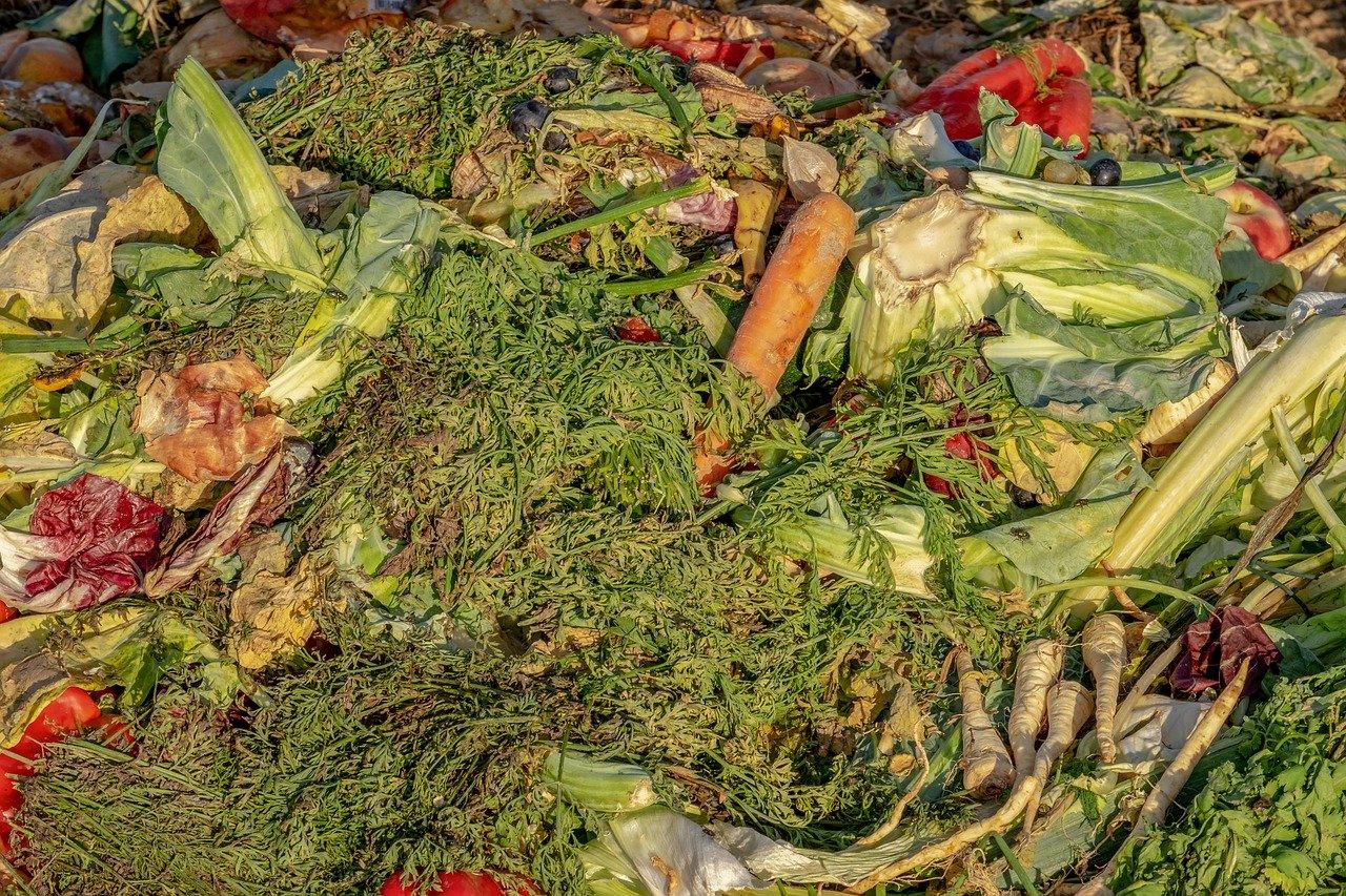 compost, garbage, biological
